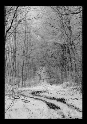 derweißewald