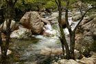 Des arbres, des rochers et de l'eau