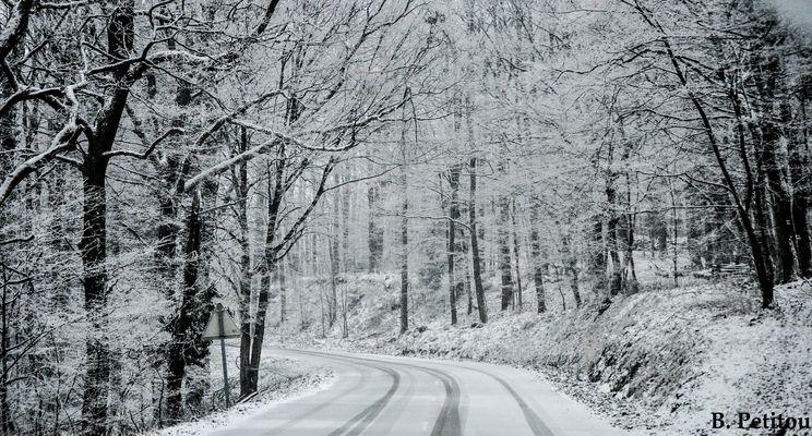 Des arbres gelé