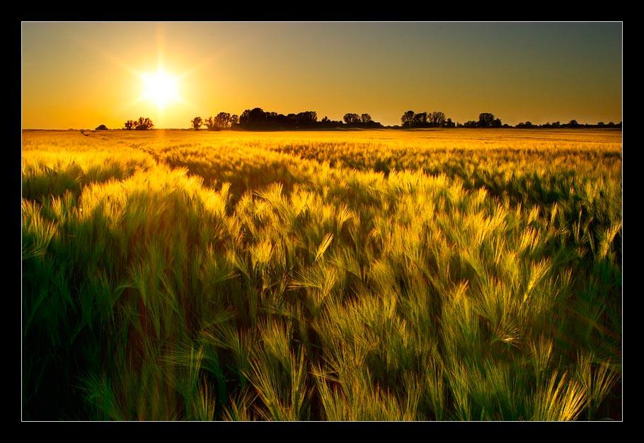 Des Bauern Gold