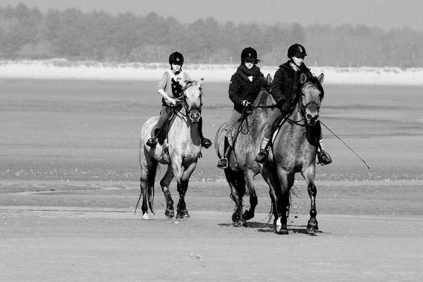 Des chevaux sur la baie de somme