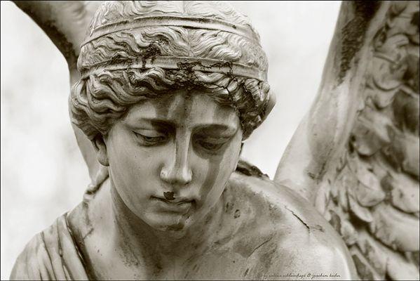 ... des engels sanfter blick ...
