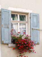 Des fleurs à la fenêtre ou la fenêtre aux fleurs…!