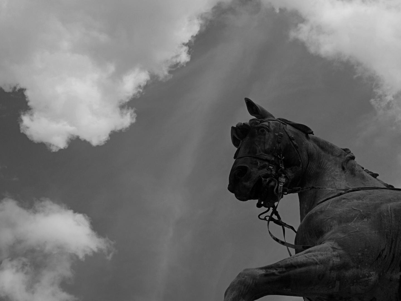 Des Kaisers Pferd
