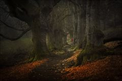 Des Kindes Märchenwald…