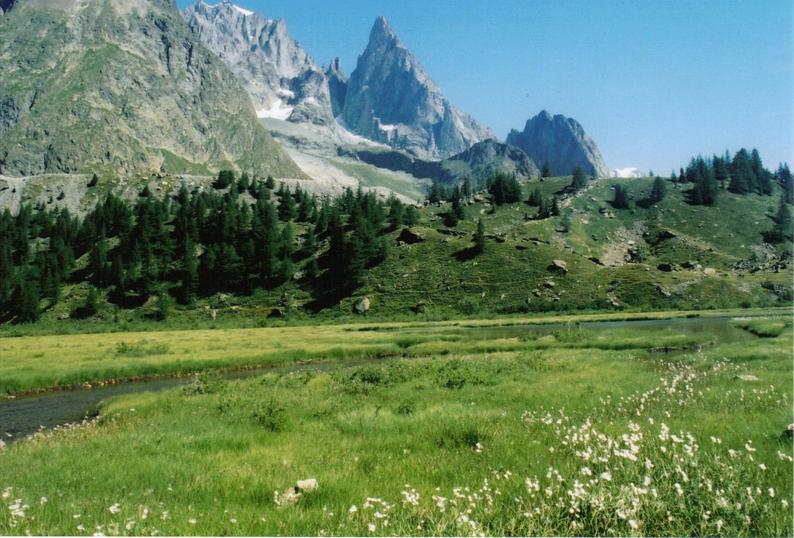 des linaigrettes dans la vallée du col de la seigne