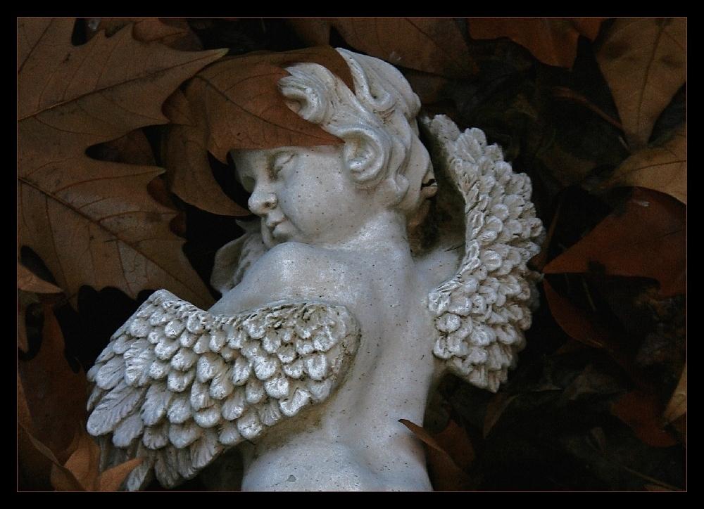 Des Menschen Engel....
