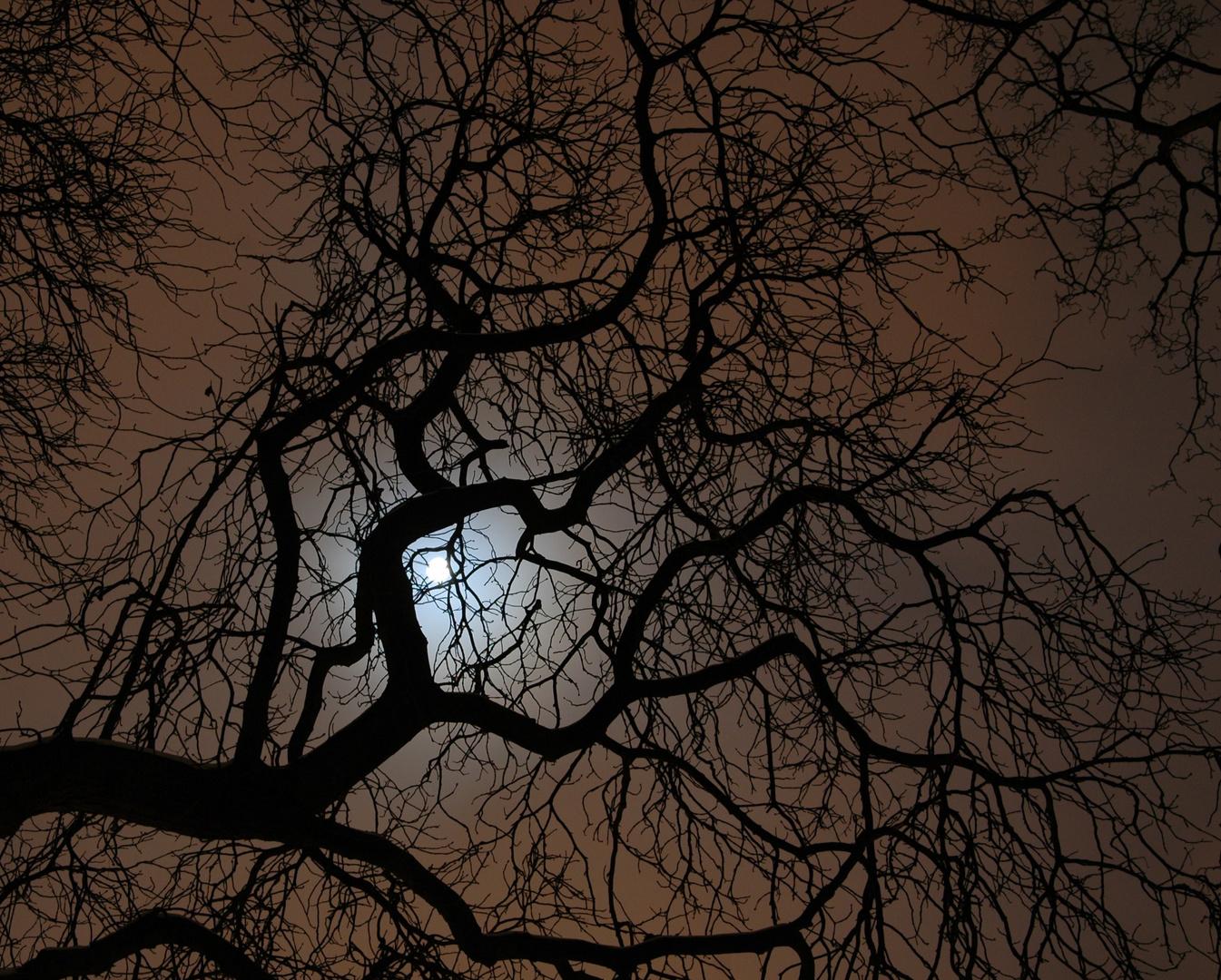 Des Nachts