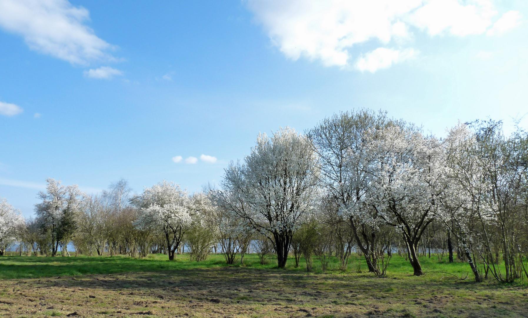 Dès que le printemps revient...