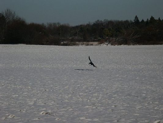 Des Raubvogels Jagd