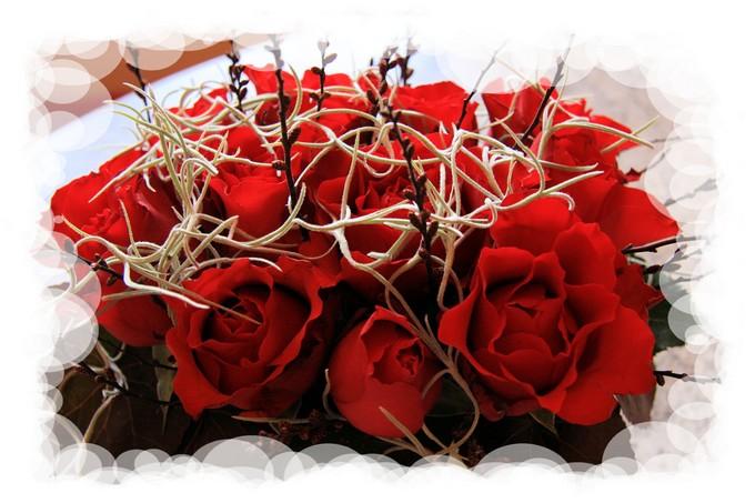 des roses pour toutes et tous........
