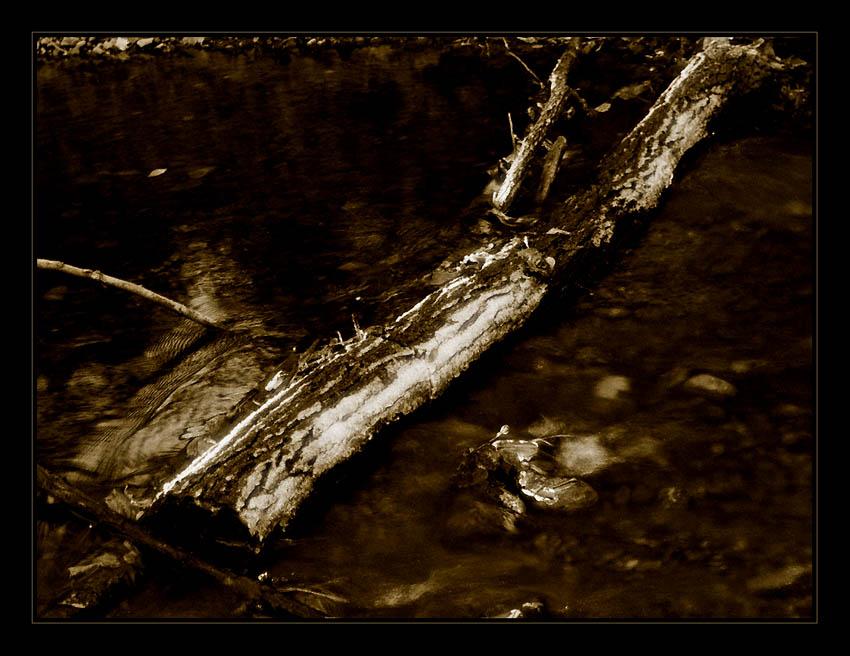Des Waldes düst're Gewässer