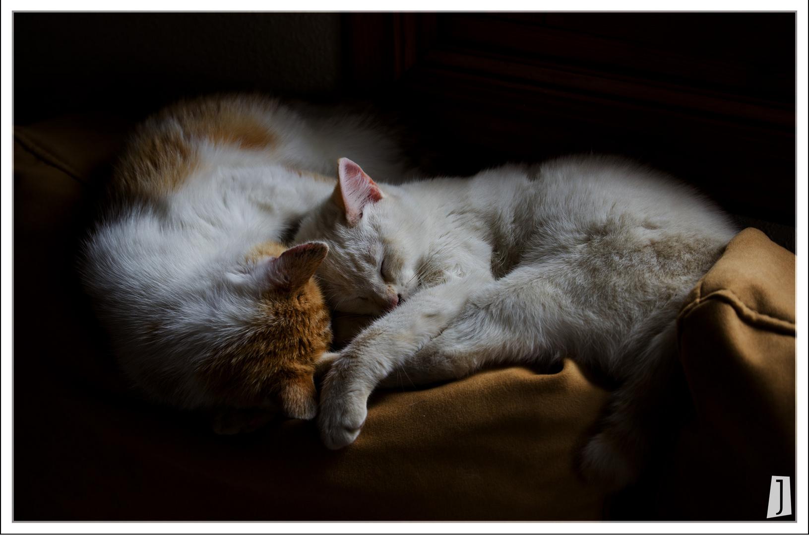 Descansando con cariño