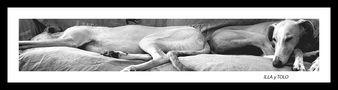 ES: Descansando de su dura jornada laboral (dedicada a Juan de Dios) by Carmeta