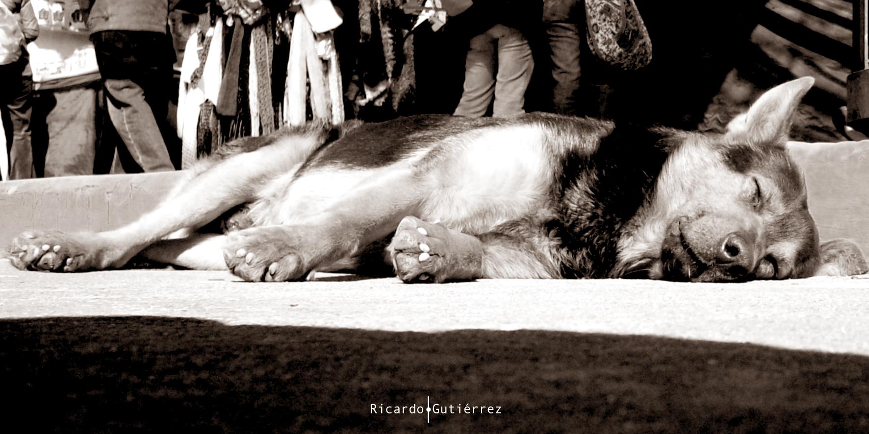 Descansando en la multitud...