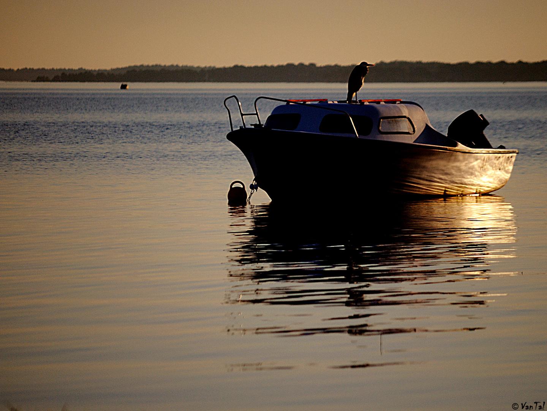 """"""" Desde Archimède los barcos flotan. """" [Gregory Suave]"""