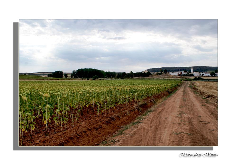 ...desde Cuenca...