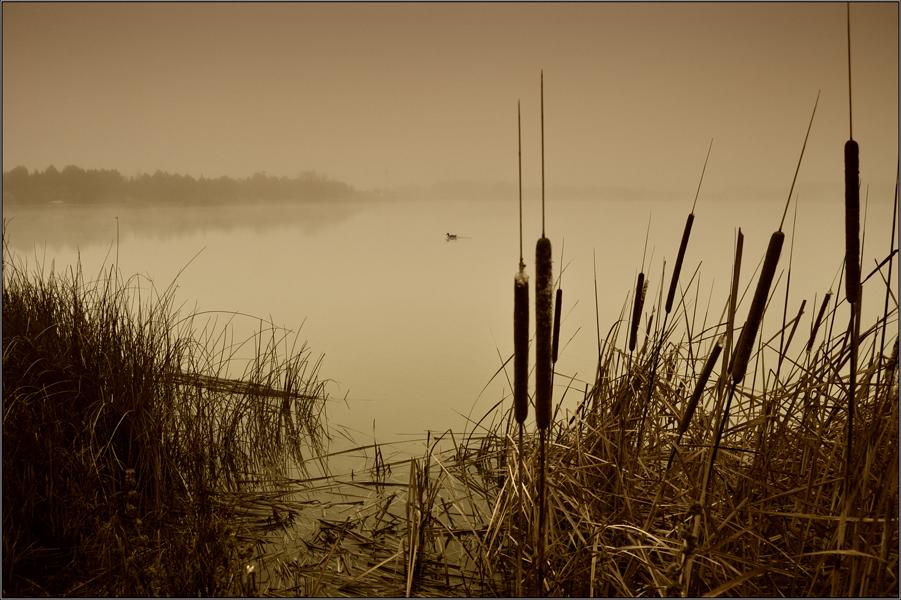 Desde la orilla