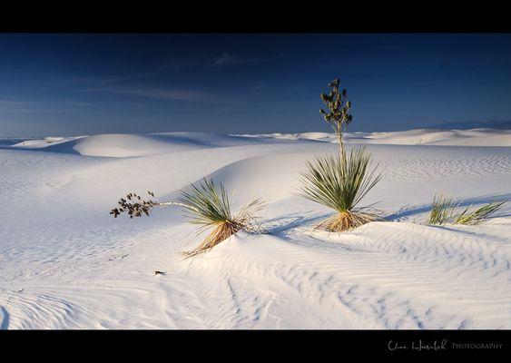 +++Desert Dream I+++