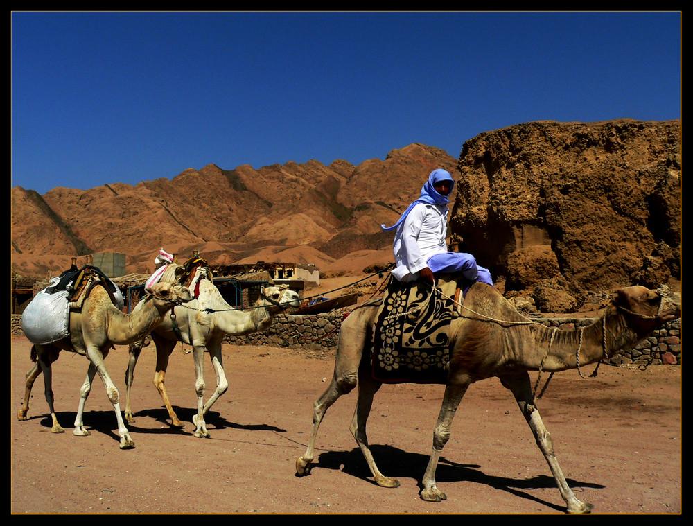 ..desert life....