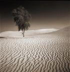 DESERT 'S WIDOW