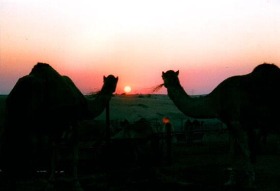 Desert Sunset (UAE)