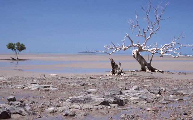 Deserted coast near Clairview