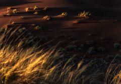 desert.storm