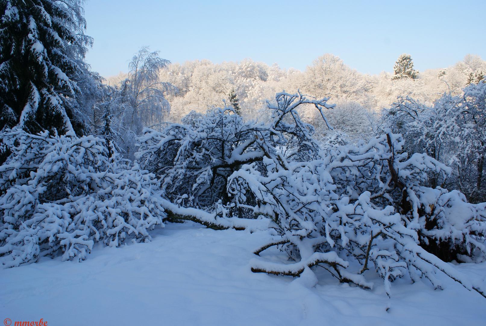 Désolation hivernale