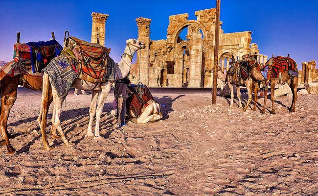 Despierta Palmira