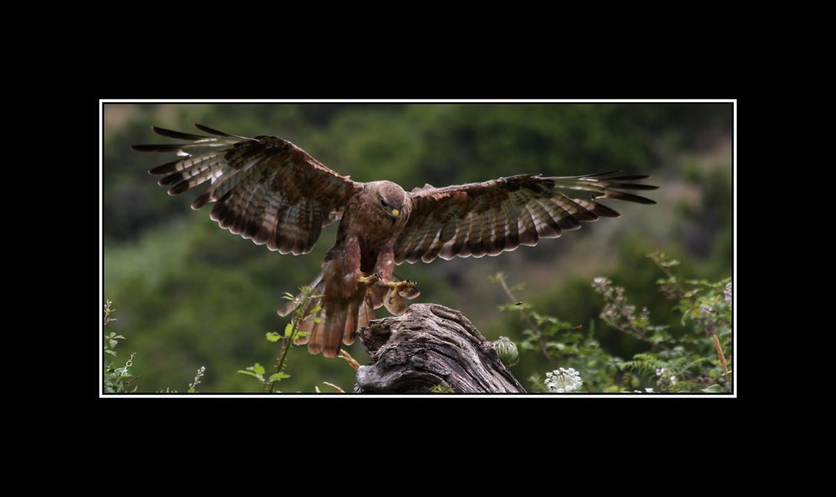 Despliegue de alas