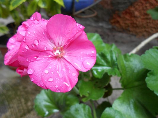 Despues de la lluvia