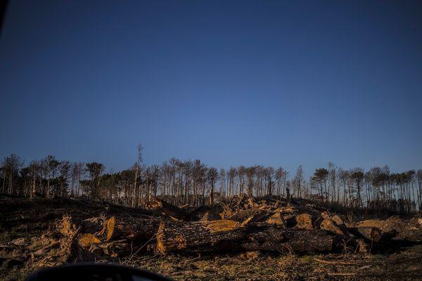 Después del incendio en la Reserva