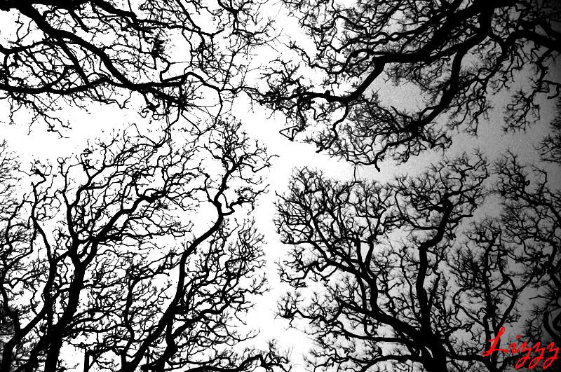 Desquebrajando el cielo