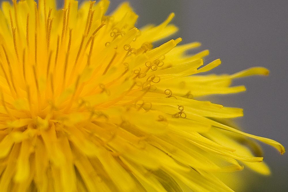 Detail einer Blüte