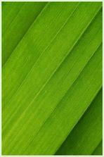 Detail vom Bananenblatt (2)