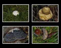 Details im Alzgerner Forst 2