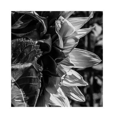 Details in Black & White