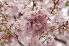 Details of Pink