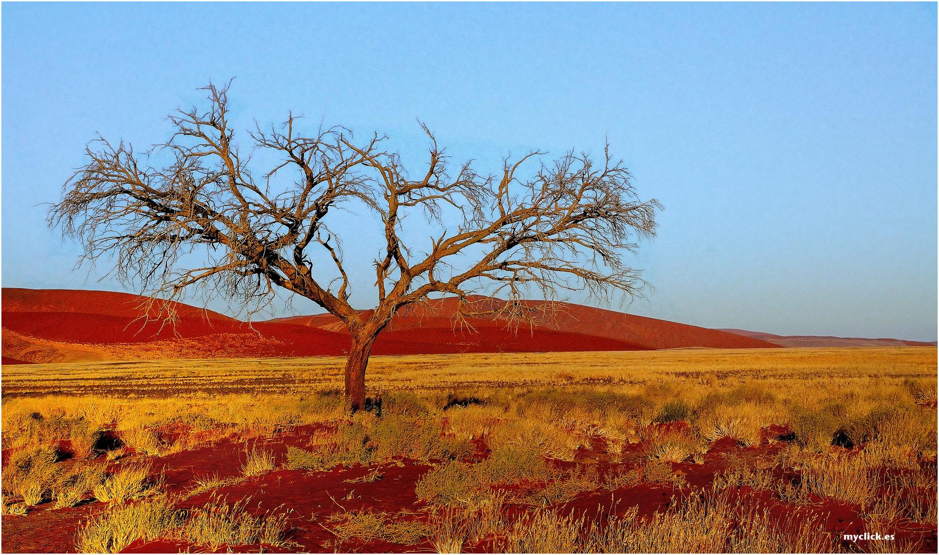 DETALLES DE SUSSVLEI -NAMIBIA (dedicada a Noland )