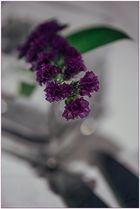 Detalles en lila