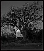 Detrás de las ramas