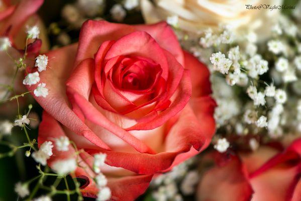 Dettaglio rosa diun bouquet