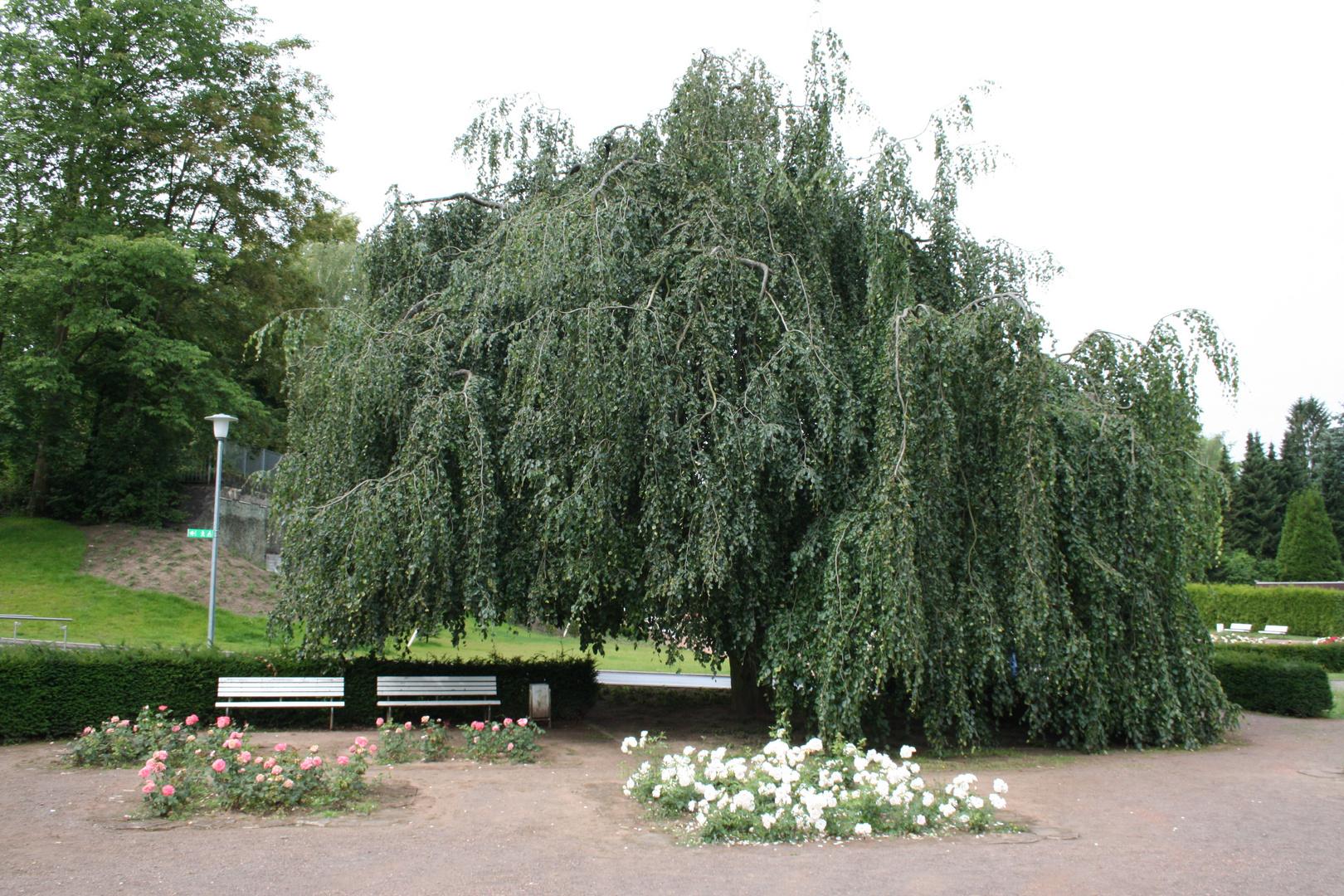 Deutsch-Französischer Garten Saarbrücken