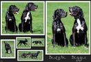 Deutsche Doggen von Rhapsody09
