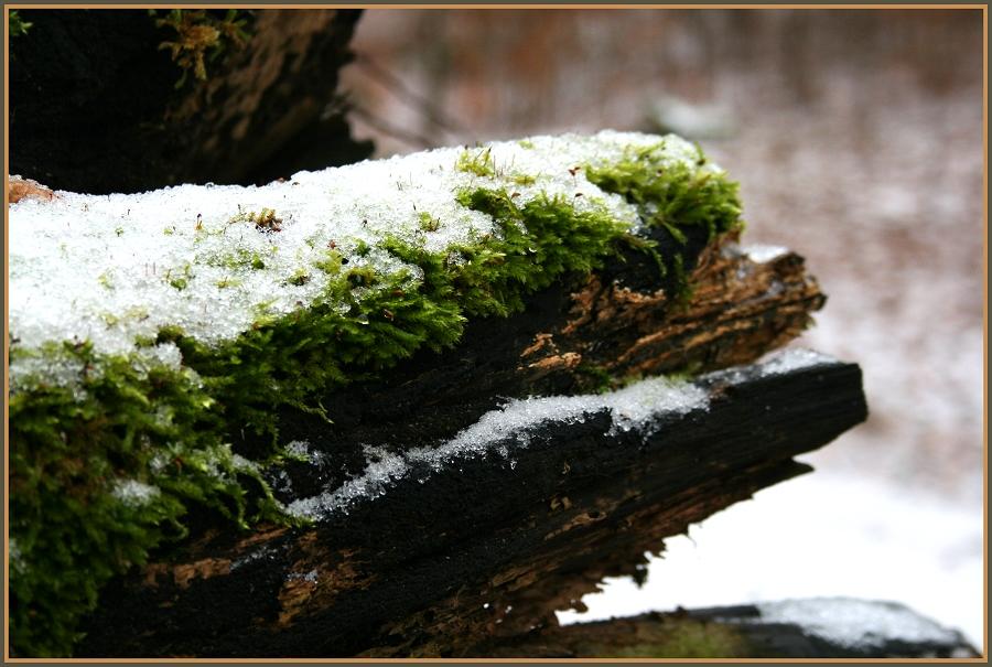 Deutsches Waldkrokodil