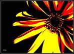 Deutschland Blume