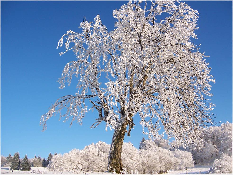Deutschland - ein Wintermärchen(1)