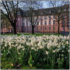 Deutschland im Quadrat - Frühling