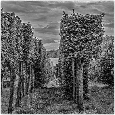 Deutschland im Quadrat - Quadrat-Bäume